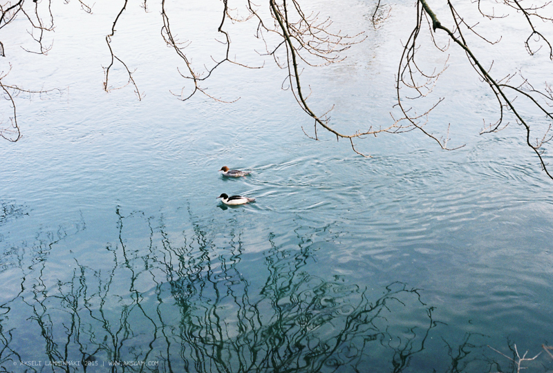 Reflections, Geneva